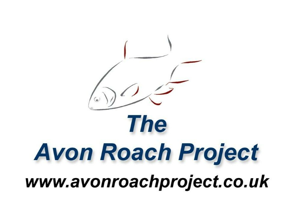 avon-roach-project-little-roach